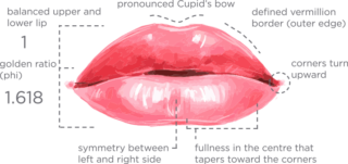 http://www.orchidental.pl/wp-content/uploads/2015/11/lip-features-320x151.png
